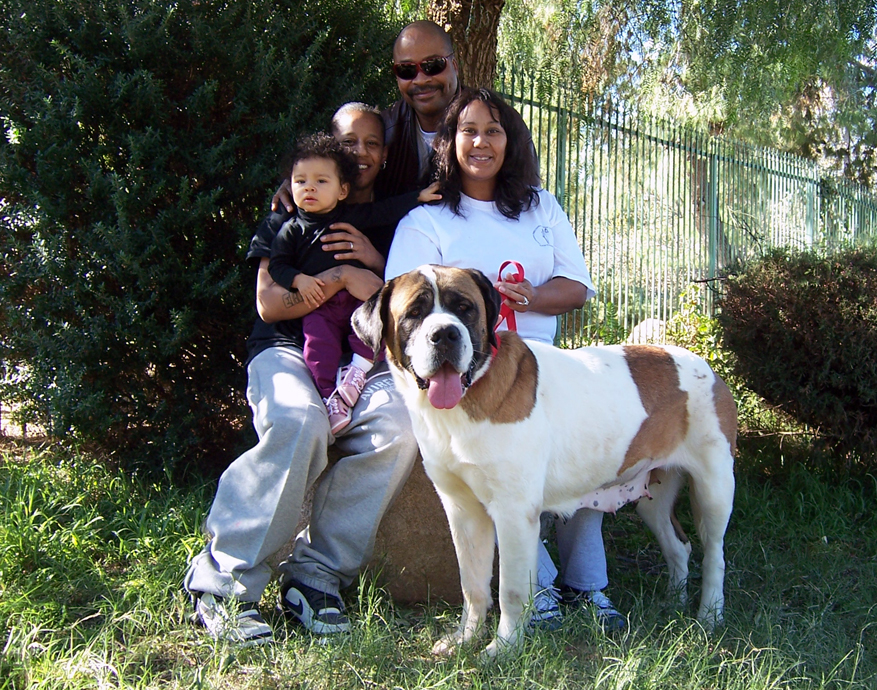 Saint Bernards at Gentle Giants Rescue and Adoptions